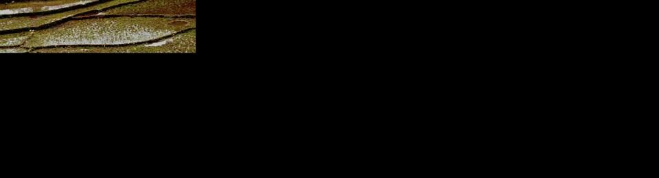 taherehbarati